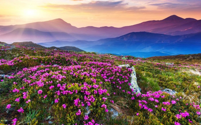 valley-of-flowers-wallpapers-1680x1050