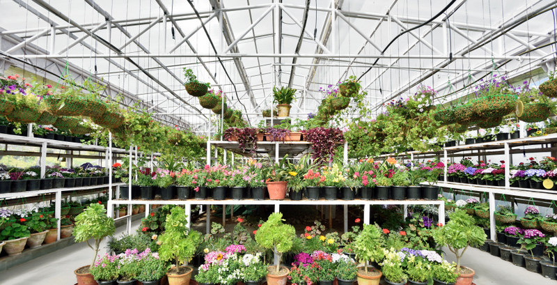 2-Greenhouse (2)